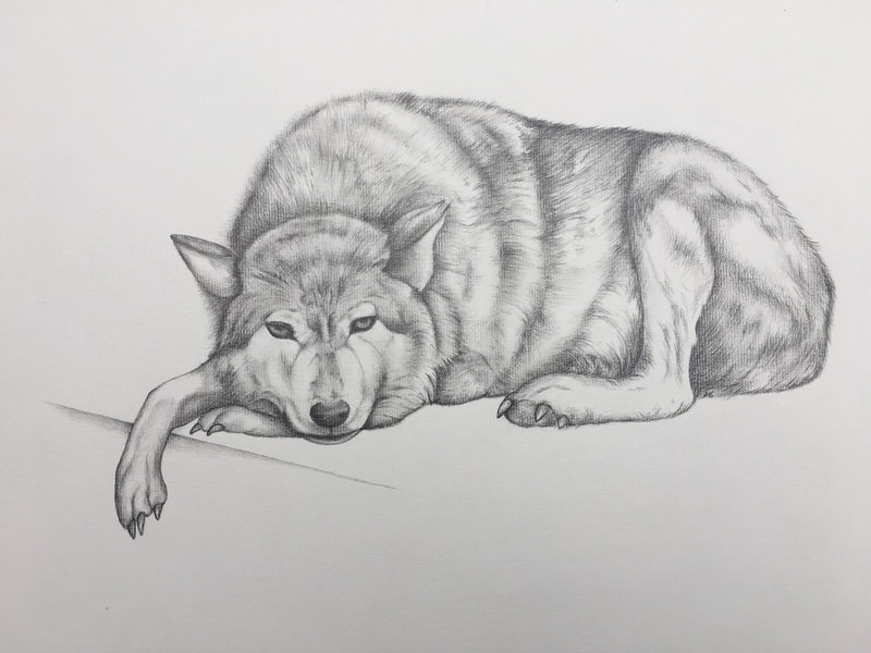 Portrait of a wolf by Allison Easton
