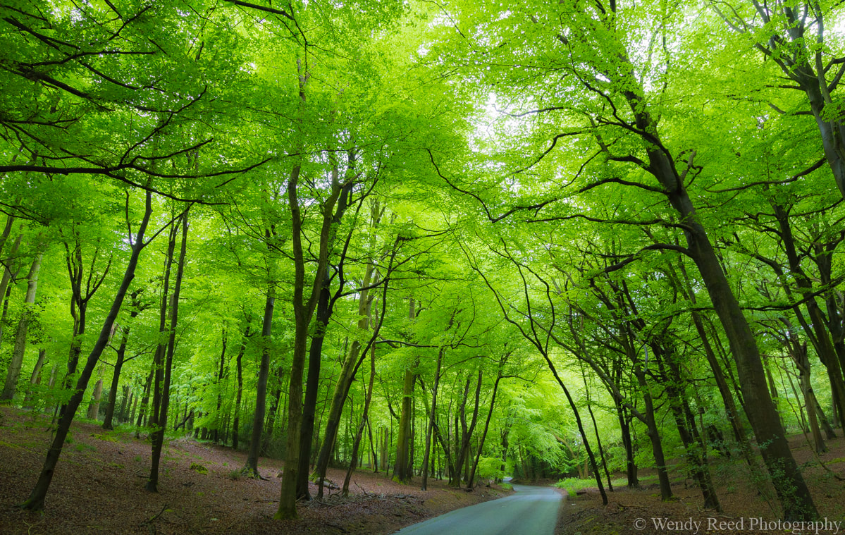 Image of trees with a road running through them, taken by Wendy Reed